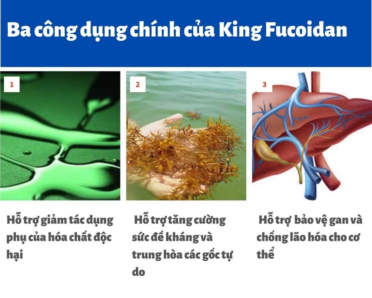 King Fucoidan & Nấm Agaricus có 3 công dụng chính cho người bệnh ung thư