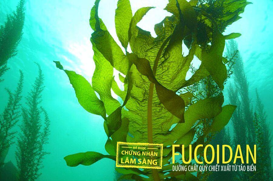 Tác dụng của Fucoidan với ung thư đã được chứng minh bằng 3000 nghiên cứu