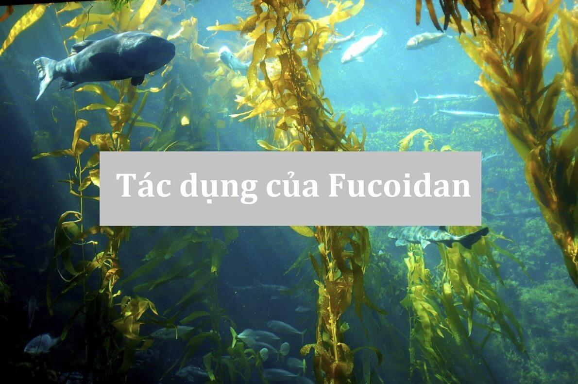 [MỚI] Tác dụng của Fucoidan với ung thư đã được chứng minh