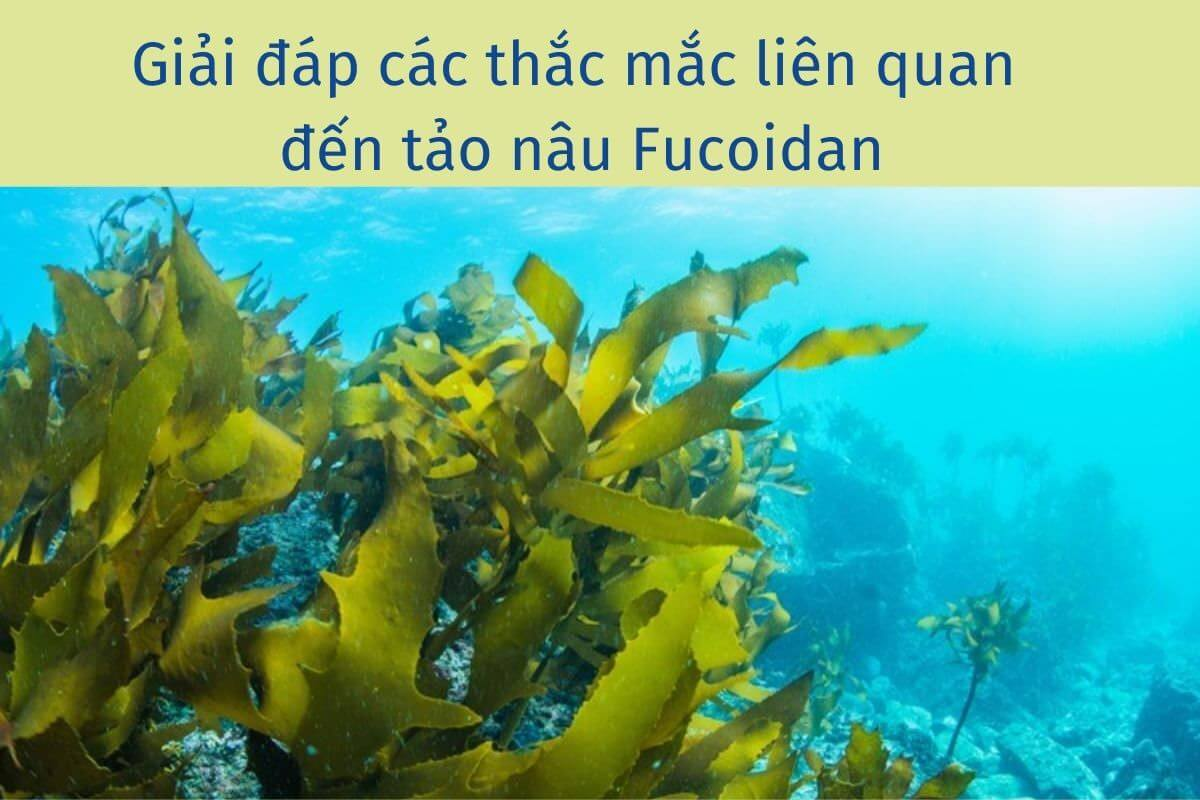 Giải đáp các câu hỏi về tảo nâu Fucoidan