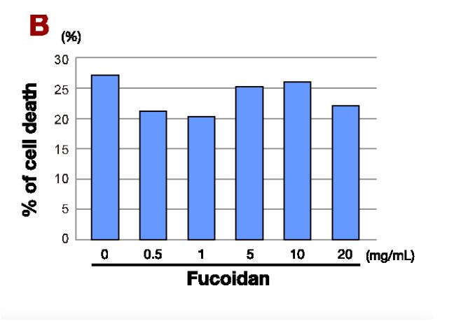 Tỷ lệ tế bào K dạ dày bị tiêu diệt bởi Fucoidan
